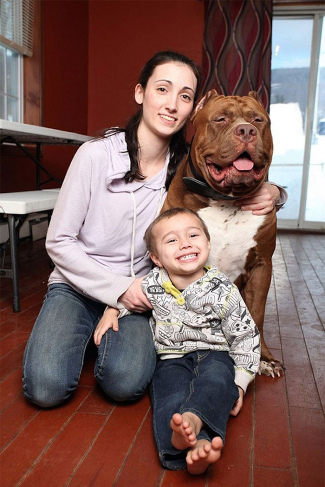 This is the largest pit bull in the world (4)